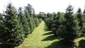 10 of Iowa's <b>best Christmas tree</b> farms