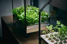 Plants & plant <b>pots</b>
