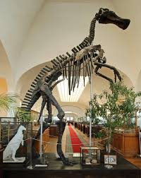 Mandschurosaurus amurensis