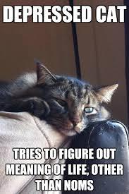 Depression cat memes   quickmeme via Relatably.com