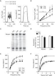 nitrosative modifications of the ca2 release complex and actin figure