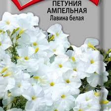 <b>Петуния ампельная Лавина</b> белая, купить в Москве, петуния ...