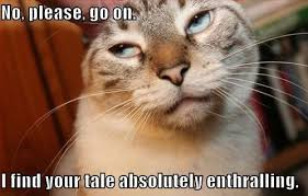 Funny cat memes tumblr | Funny Family Wallpaper via Relatably.com