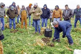 consider early growth uneven stands for cover crop management