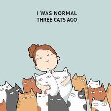 """Résultat de recherche d'images pour """"pinterest cats"""""""