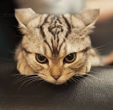 glaring cat. / for the love of cats! - Juxtapost via Relatably.com