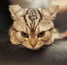 glaring cat. / for the love of cats! - Juxtapost via Relatably.com