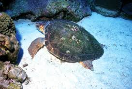 Celebrating <b>Sea Turtle</b> Week 2019 | NOAA Fisheries