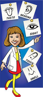 five senses facts science trek idaho public television taste hearing sight touch smell