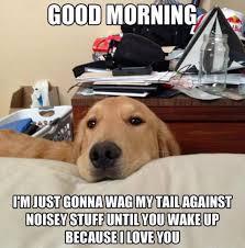 Adorable Dog Meme | OMG DOGS! via Relatably.com