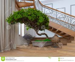 bonsai tree in the interior of a private house with decorative s bonsai tree interior