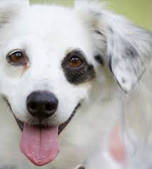List of <b>Dog</b> Breeds | Petfinder