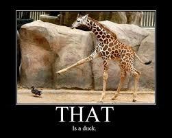 WamWan - The Daily Weird and Wonderful - This giraffe is very ... via Relatably.com