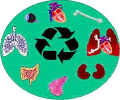 Resultado de imagen para trasplantes de organos