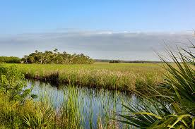 Image result for everglades