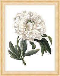 <b>Картина Экорамка</b> White <b>peony</b> 37x47 см — купить в интернет ...