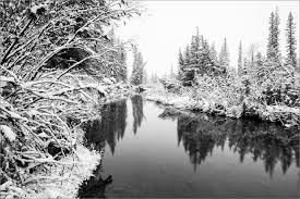 Image result for calgary in winter pictures