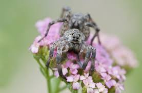 The <b>Wolf</b> Spider: How Dangerous Is its Bite?