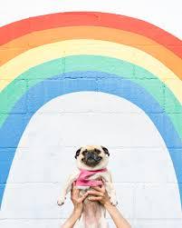 BLM <b>rainbow pug</b> — LA PUG MEET UP!