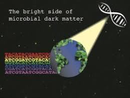<b>The bright side of</b> microbial dark matter: lessons learned from the ...