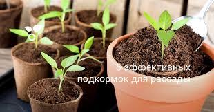 5 эффективных подкормок для <b>рассады</b>. Чем подкормить <b>рассаду</b>?