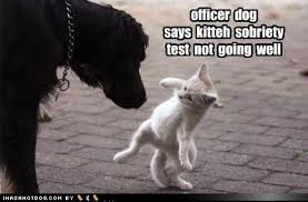 Image result for dog funnies