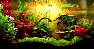 Аквариумные <b>растения</b> все для начинающих!