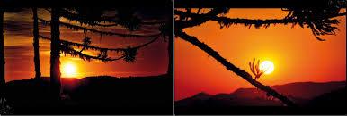 Resultado de imagem para IMAGENS DE AVES BELAS