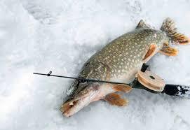 январская рыбалка