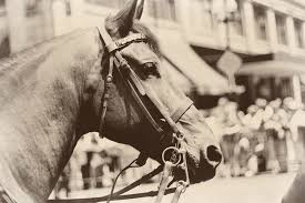 Image result for vintage horse