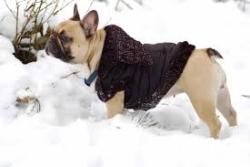Best <b>Dog Jackets</b> for <b>Winter</b> 2019 - Slope Hound
