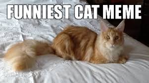 Funniest Cat Memes - UK Cat Breeders via Relatably.com