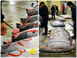 <b>JAPAN</b> | Tsukiji <b>fish</b> market tuna auction - 10 FAQ's answered • The ...