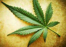 Image result for marijuana leaf