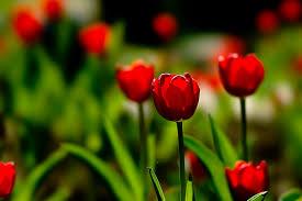 لجمال زهورك ونباتاتك images?q=tbn:ANd9GcQ
