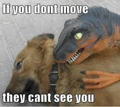 FunniestMemes.com - Funny Memes - [If You Don't Move They Can't ... via Relatably.com