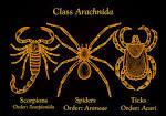arachnidan