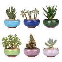 Wholesale Plant Terrariums NZ
