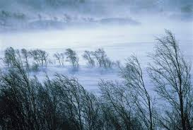 Image result for windy tree winter