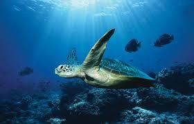 """Результат пошуку зображень за запитом """"фото океан"""""""