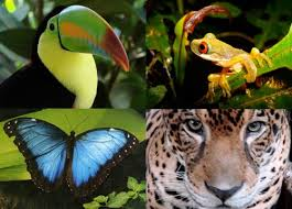 Image result for rainforest animals
