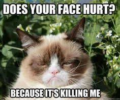 grumpy cats on Pinterest | Grumpy Cat Meme, Grumpy Cat and Grumpy ... via Relatably.com