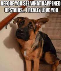 Dog Gone Funny on Pinterest | Dog Owners, Dog Humor and Dogs via Relatably.com