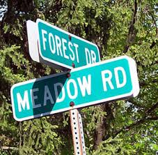 Image result for forest drive