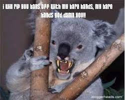 Koala Meme on Pinterest | Bear Meme, Doge Meme and Carmen Salinas Meme via Relatably.com