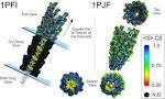 bacteriophage pf1