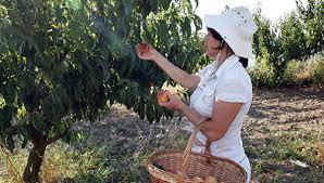 НБС хочет делать крымские соки и может выращивать ...