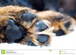 Από τι αποτελούνται τα πέλματα του σκύλου;