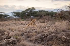 wildlife conservation essay   econimicsessaywriting  the illegal hunting and killing of rhinos and lions in south africa and zimbabwe have ignited a heated debate over the so called trophy hunting