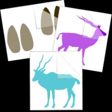 Fun <b>Animal Car Stickers</b>   <b>Animal Window Decals</b>